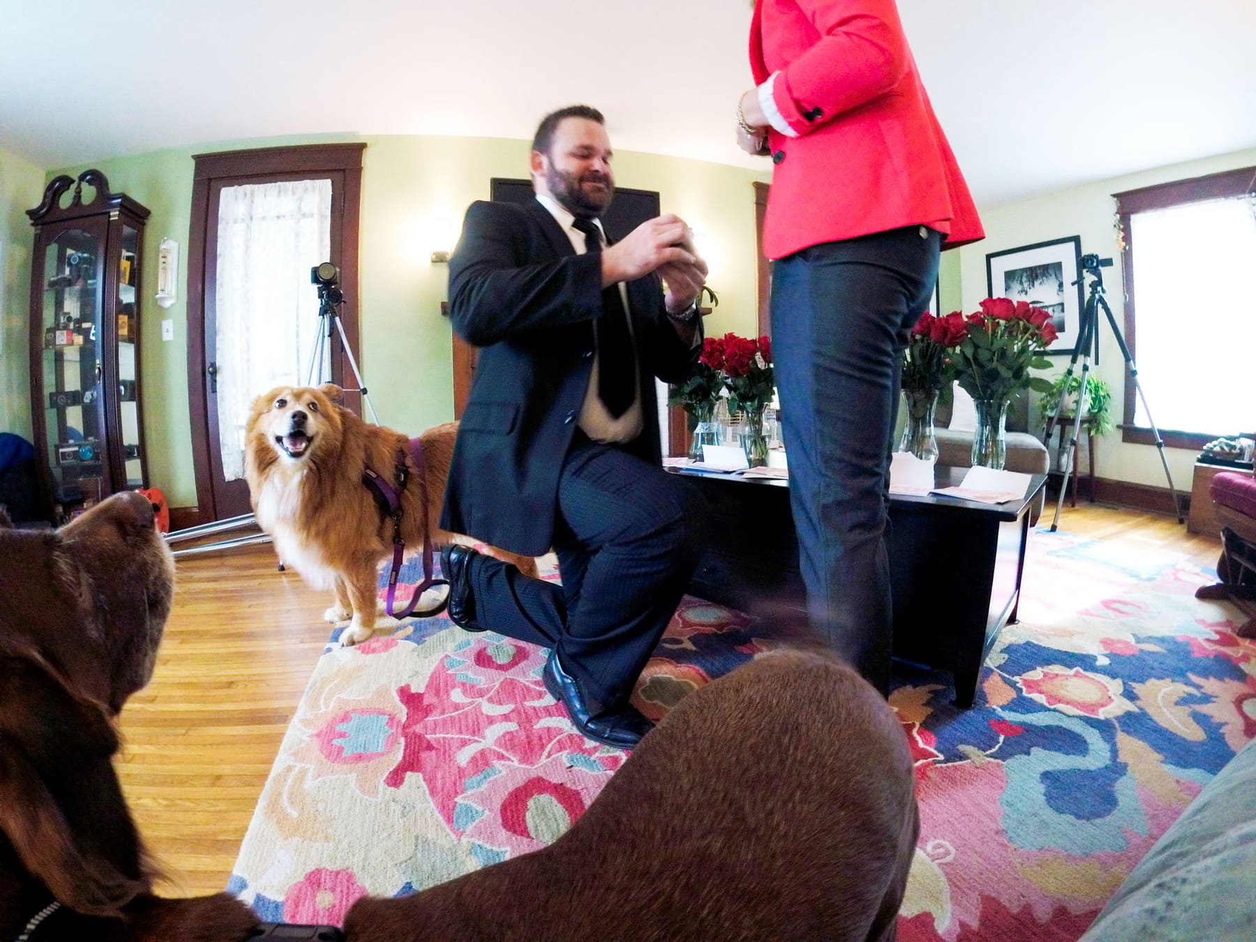 Adam Stultz proposes to Kelly Heck with the dogs!